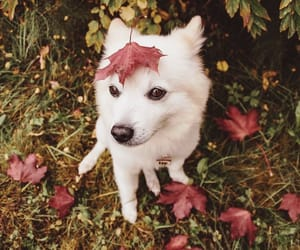 animal, dog, and leaves image
