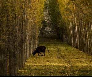 autumn, camino, and naturaleza image