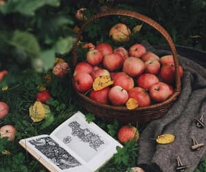 apples, autumn, and basket image