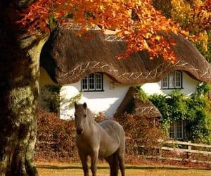 autumn, horse, and fall image