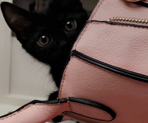 baby animals, black, and cats image