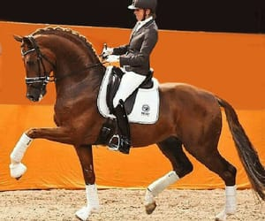 competition, dressage, and horses image