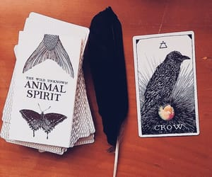 animal, cards, and oracle image