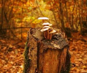 autumn and mushroom image