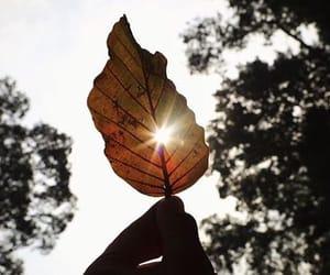fall, leaf, and nature image