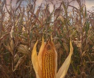 autumn, corn, and fall image