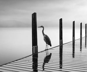 birds, loneliness, and paysages image