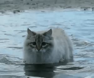 cat, gif, and sea image