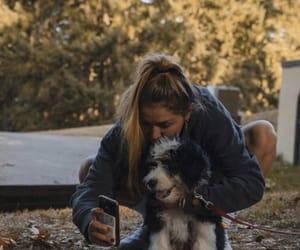 dog, chelsea cutler, and bernedoodle image