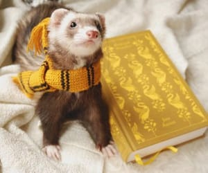 ferret, harry potter, and hufflepuff image