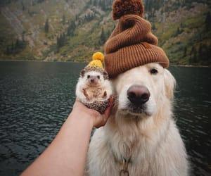 animal, dog, and hedgehog image