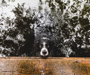 dog, germany, and good life image