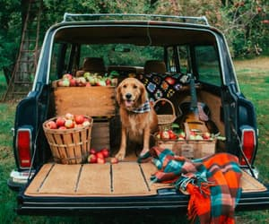 fall, autumn, and dog image