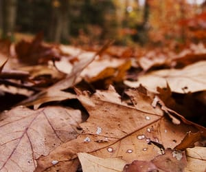autumn, cosy, and leaves image