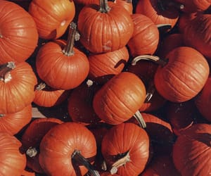 autumn, grunge, and vintage image