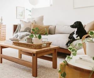dog, minimal, and green image
