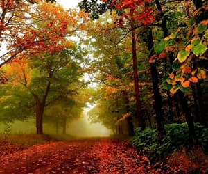 autumn, colorful, and fall image