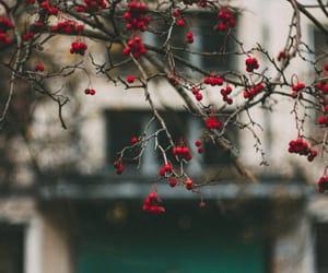 Image by Aleksandra