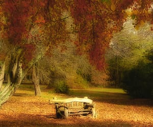 2006, chair, and leaves image