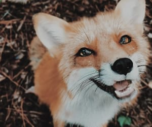 aesthetic, fox, and nature image