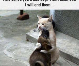friendship, funny, and funny cat image