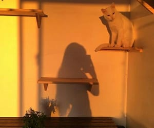 girl, cat, and shadow image