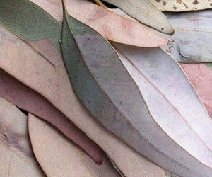leaves, pink, and pastel image