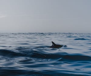 ocean, summer, and animal image