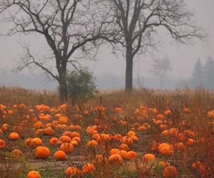 pumpkin, autumn, and fall image