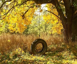 autumn, trees, and country image