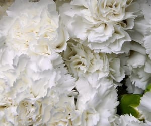 background, carnation, and floral image