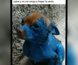 meme, perrito, and stich image