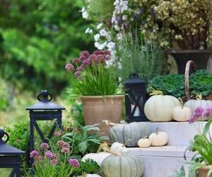 art, autumn, and backyard image