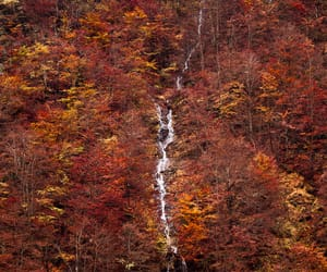 autumn colors, landscape photography, and trees image
