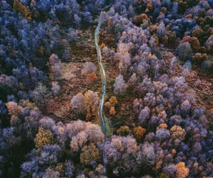 aerial photography, autumn colors, and forest image