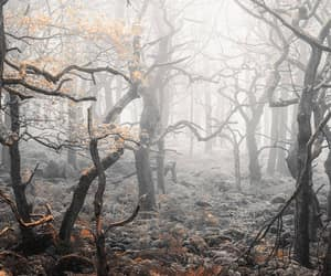 autumn colors, dreary, and fog image