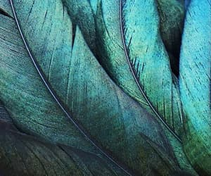 feather, green, and blue image