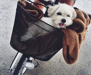 bicycle, fluffy, and animal image