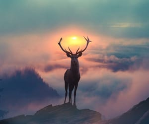 nature, deer, and animal image