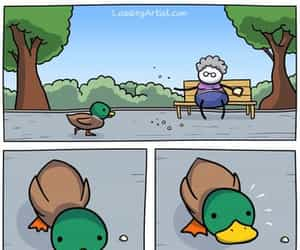 duck, funny, and bread image