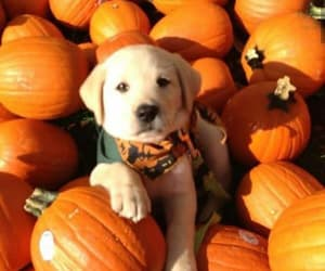 puppy, Halloween, and cute image