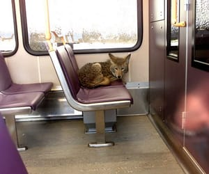 coyote, train, and wolf image