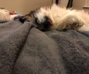 pup, shih tzu, and shih image