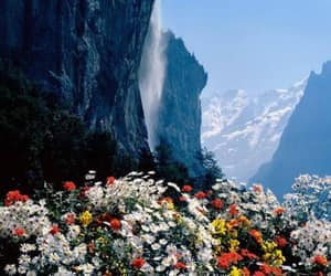 beautiful, flowers, and Moutains image