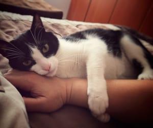 cat, mycat, and lovemycat image