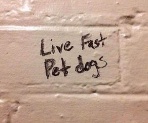 dogs, live, and text image