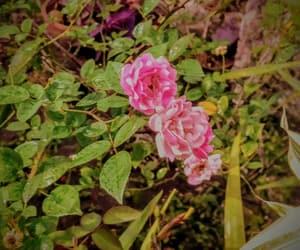 flor, natureza, and flower image