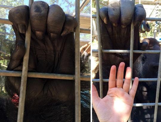 perspective, spirit animal, and human hand image