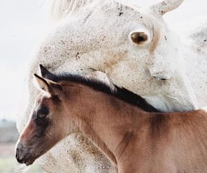 horse, animals, and babys image