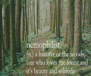 eden, forest, and nature image